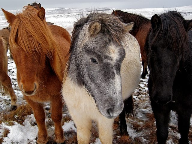 Three Cold Horses