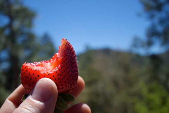 2010/365/136 Enjoying a Strawberry in Strawberry