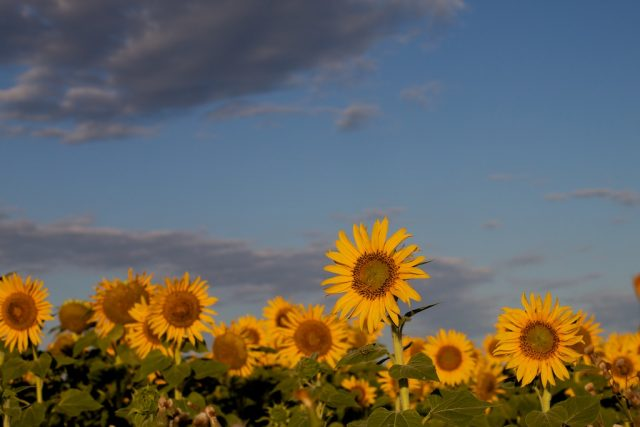 Sunny Morning in Manitoba