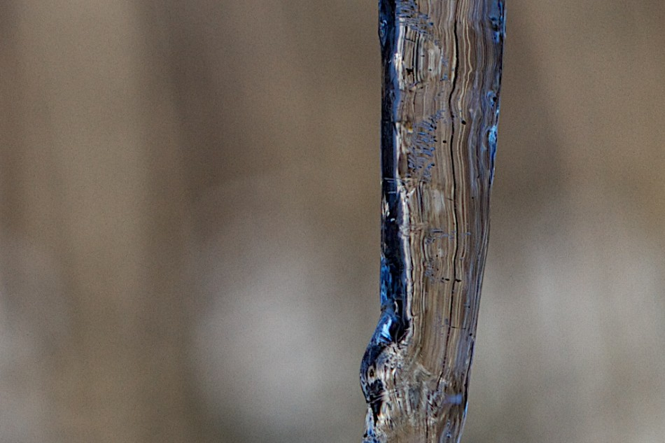 The Subtle Texture of Ice and Light