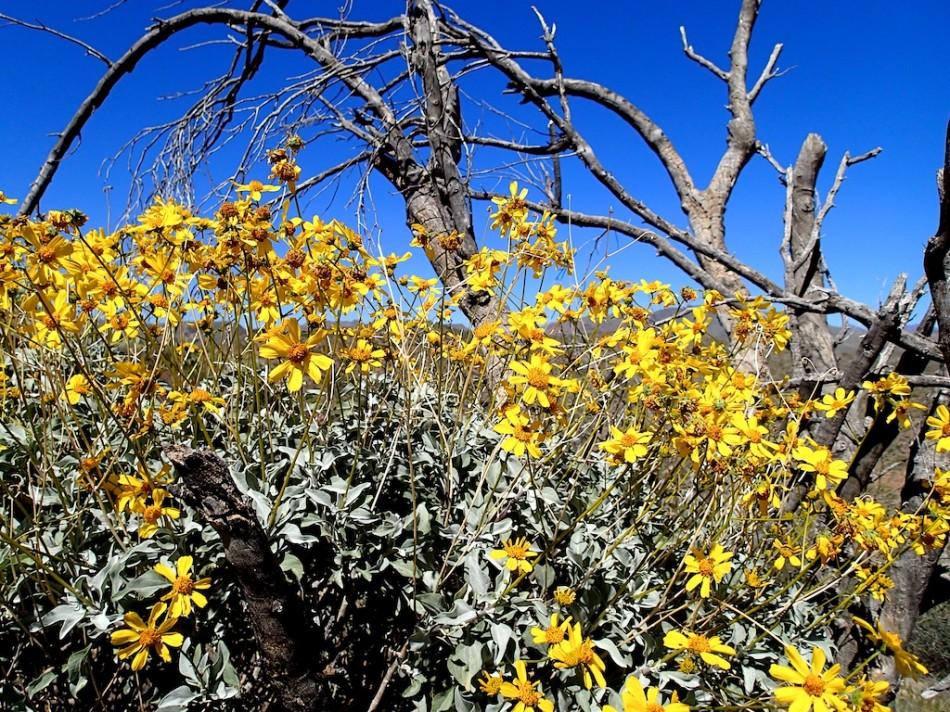 The Glory of the Sonoran Desert