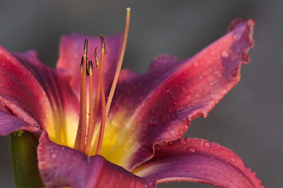 Just Stamen Around