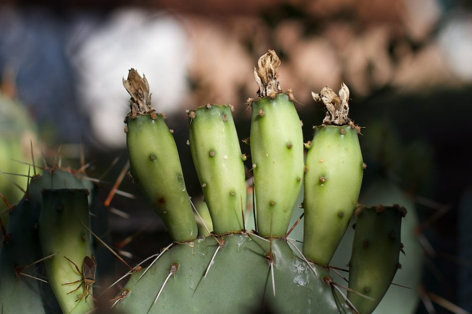 Prickly Fingers