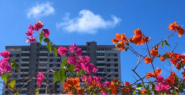 Flowery Rooftop