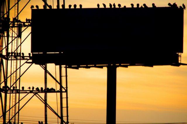 Pigeon Advertising