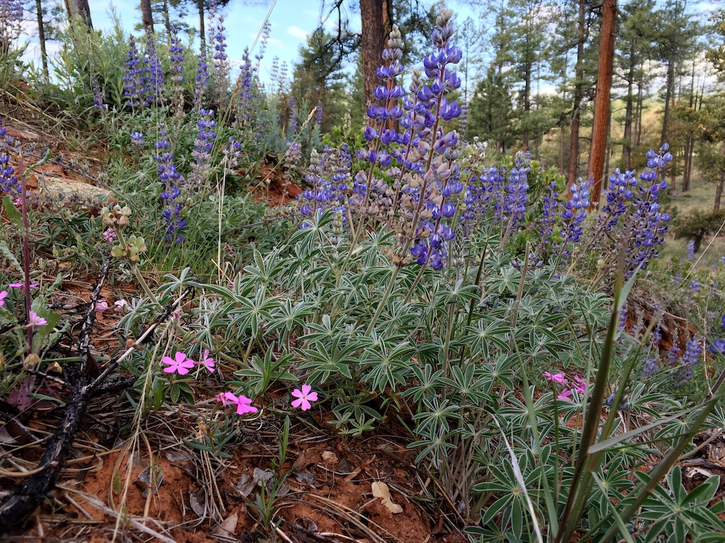 Forest Wildflowers